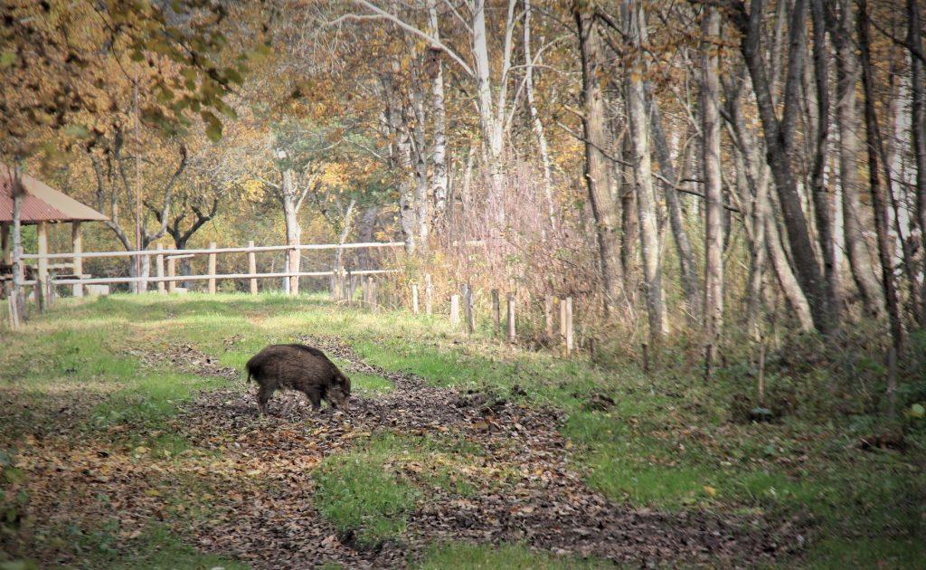 """Baigėsi rudeninė akcija """"Medžioklė"""": nustatyta 18 Medžioklės taisyklių pažeidimų"""